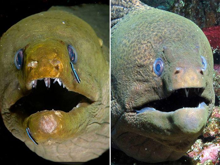 Cute Eels
