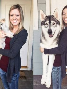 Adorable Dogs Then And Now