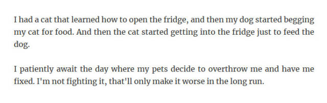 Pets Are Smart
