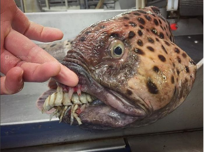 Photos Of Rare And Strange Fishes Posted By A Russian Fisherman