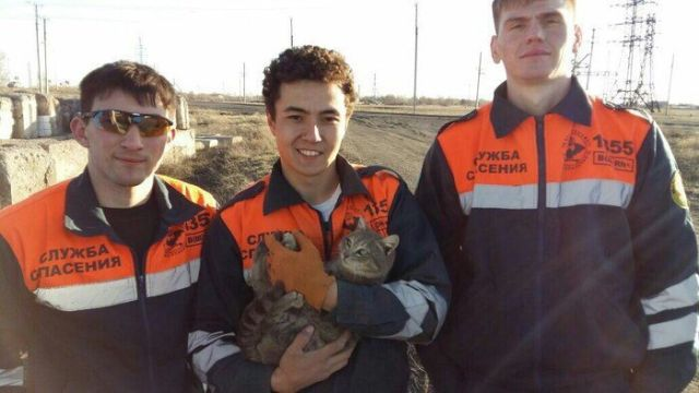 They Saved A Cat