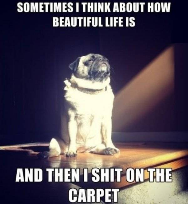 Funny Dogs, part 2