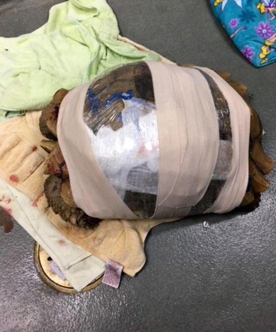Tortoise Repair