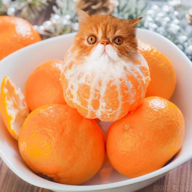Cats Photoshopped Into Food