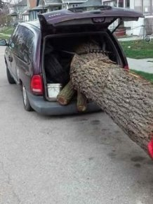 Tree Transportation