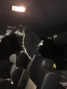 A Bear Demolish A Car