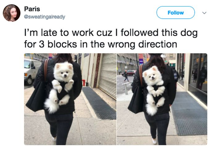 Funny Tweets, part 10