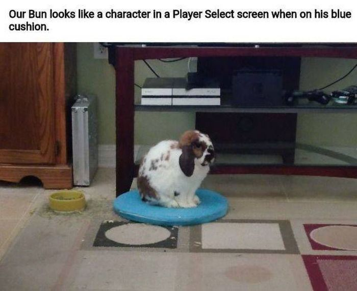 Pictures For Gamers, part 24