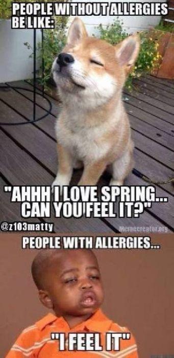 Allergy Season Memes