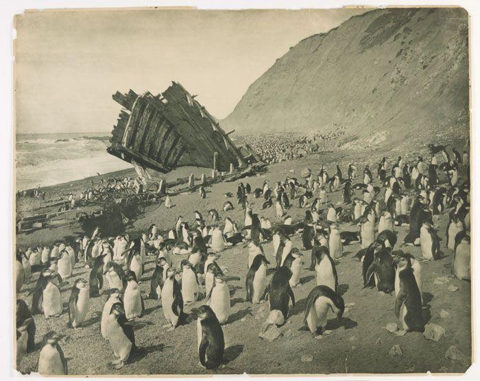 Rare Photos Of First Australasian Antarctic Expedition Taken 100 Years Ago