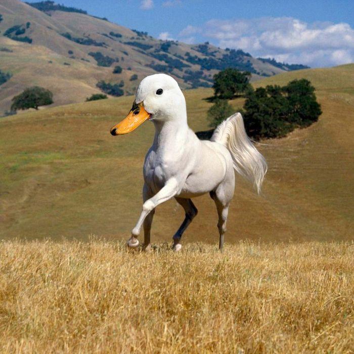 Photoshopped Animals, part 2