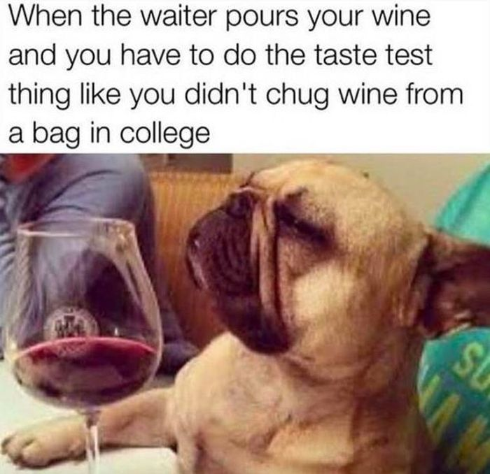 Memes About Drunk People