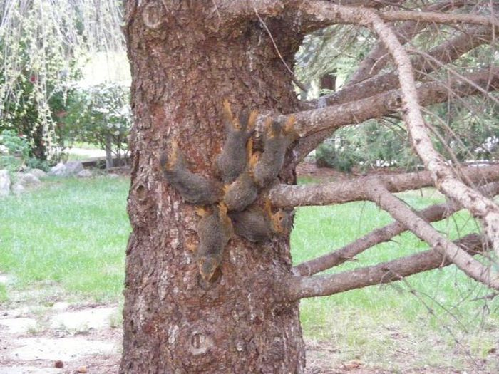 People Rescue 6 Squirrels Stuck In A Jam After Getting Their Tails Tangled