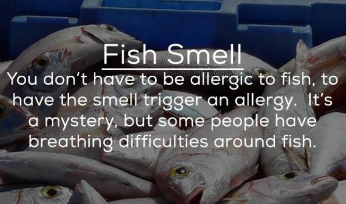 People Can Be Allergic To Anything