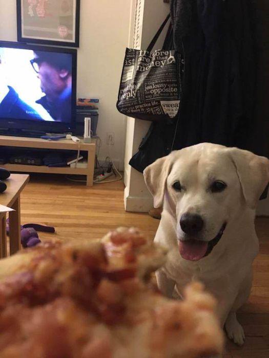The Way Pets Look At Food...