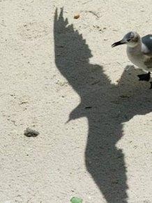 Interesting Shadows