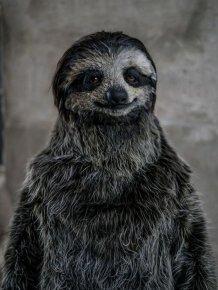 Sloth Suit