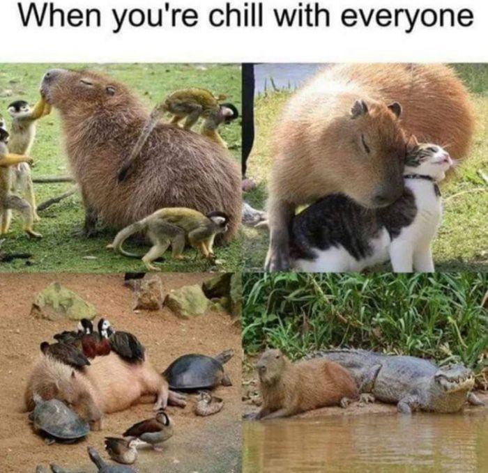Nice Memes, part 2