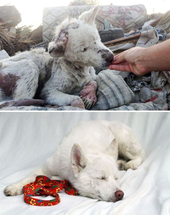 Animals Before And After The Rescue