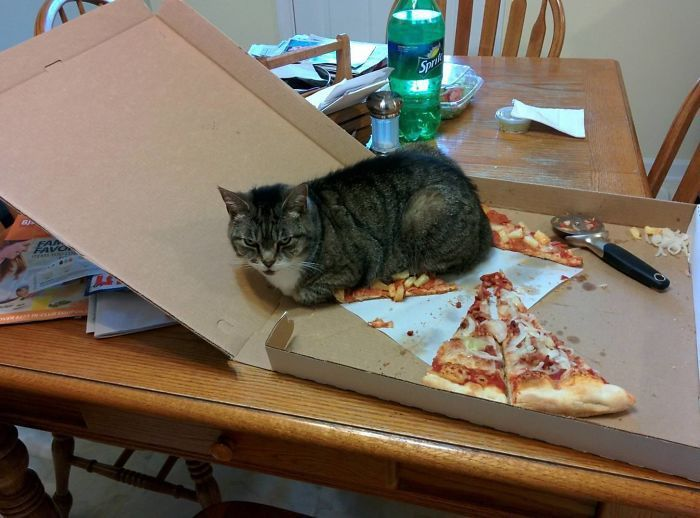 Cats Got Caught
