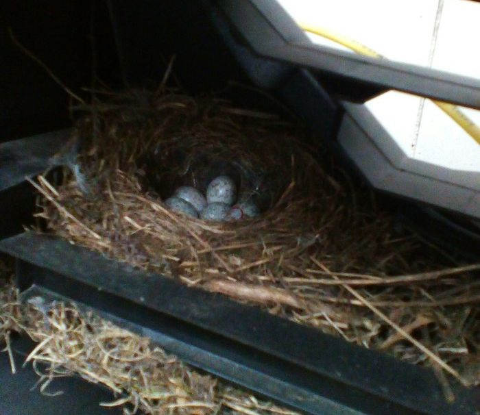 There Is A Little Surprise In The Car