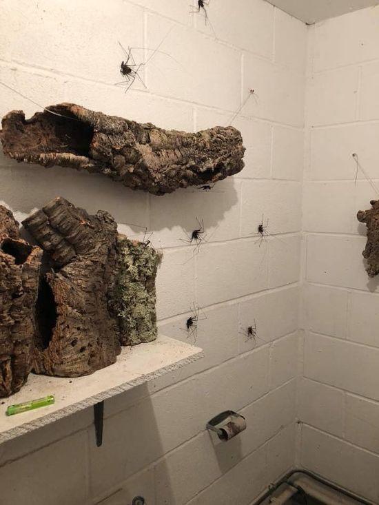 Scary Bathroom Decor