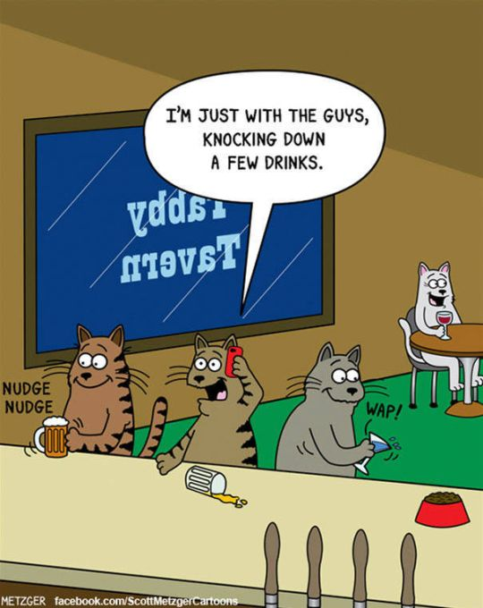 Funny Cat Cartoons