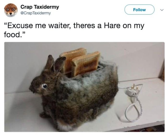 Taxidermy Fails, part 2
