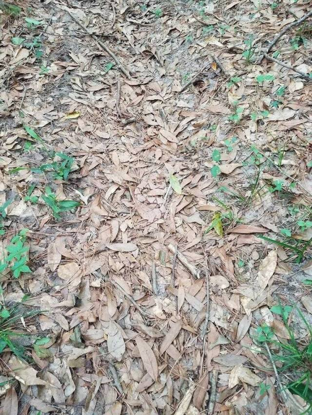 Can You Spot A Snake In This Photo?