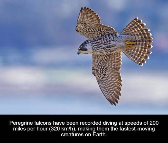Interesting Facts, part 29