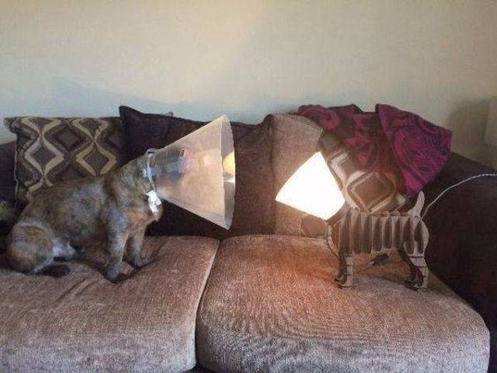 Funny Animals, part 46