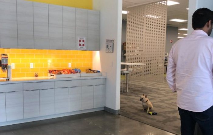 Good Boy Adorably Follows The Rules While Waiting For Owner