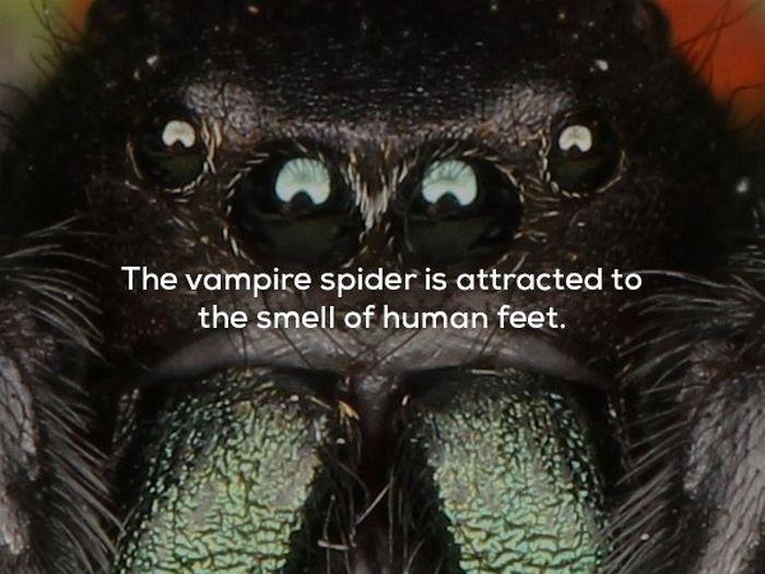 Scary Facts, part 16