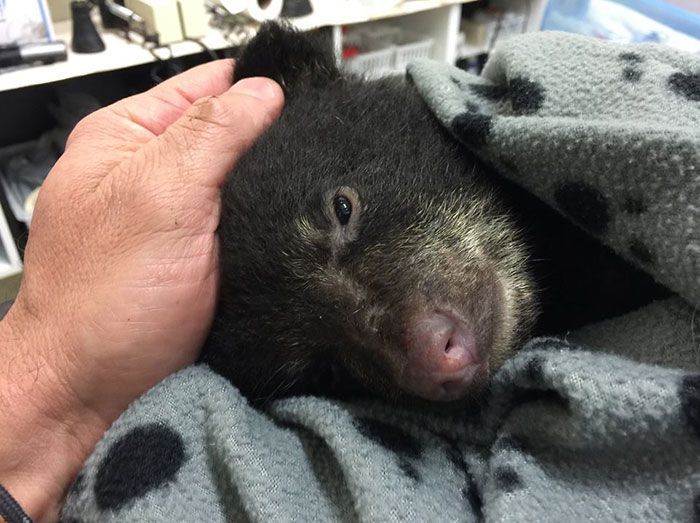 A Photographer Rescued A Dying Bear Cub
