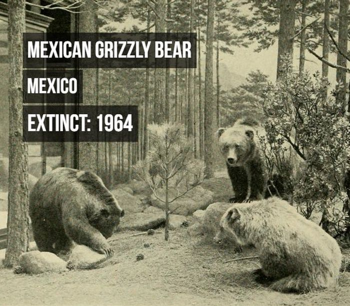 Animals That Have Become Extinct