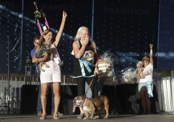 English Bulldog Zsa Zsa Wins World's Ugliest Dog Title