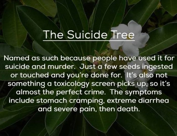 Dangerous Plants