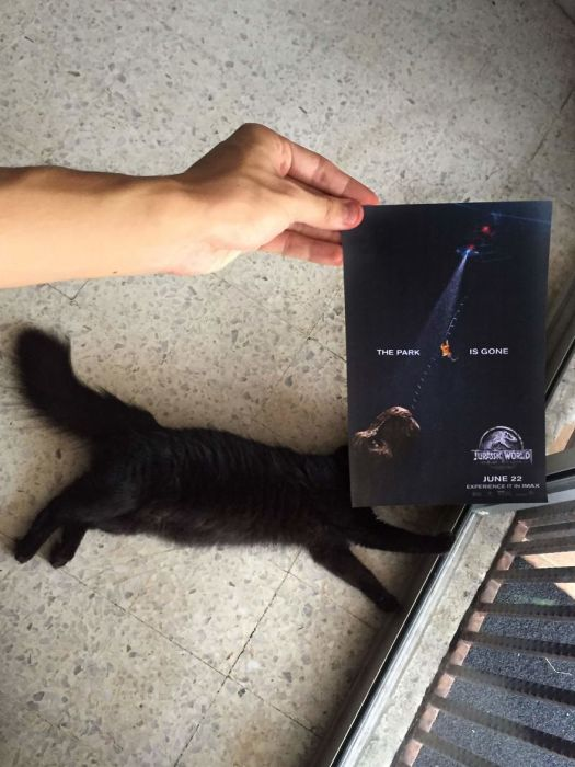 Cats Inserted Behind Famous Movie Posters