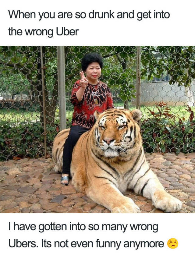 Uber Rides Described With Animal Memes
