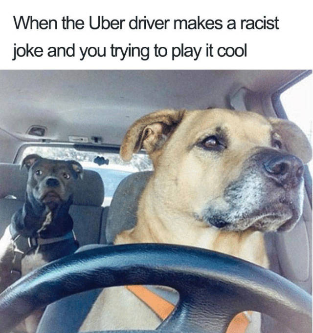 Best Car For Uber >> Uber Rides Described With Animal Memes | Animals