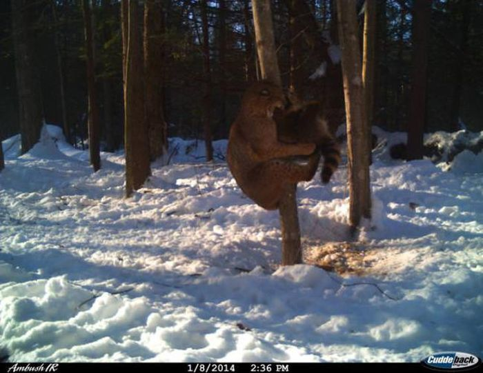 Interesting Shots By Trail Cams