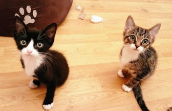 Kittens With Two Paws