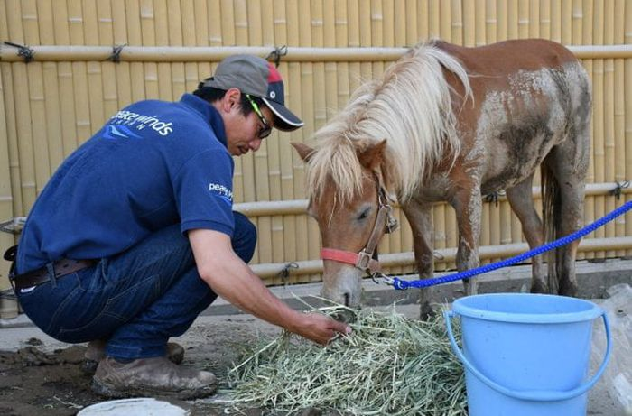 Missing Pony Washed Away In Flood Found Alive On Roof