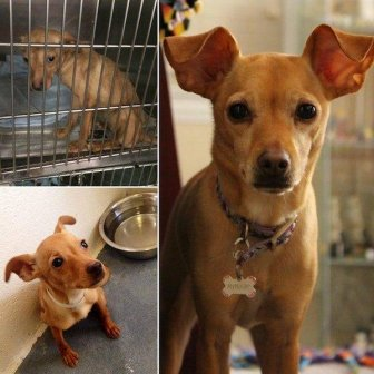 Dogs After The Adoption