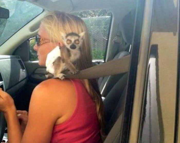 When  Girls Drive
