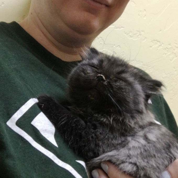 Dwarf Kitten Found Living Under A Shed, Discovers Cuddles For The First Time