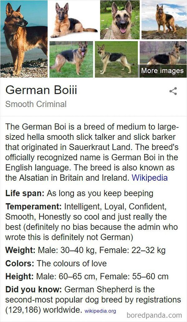 Fake Wikipedia Pages About Dog Breeds Are Better Than The Original Ones
