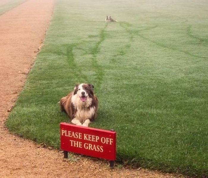 Animals Don't Care About Human Rules