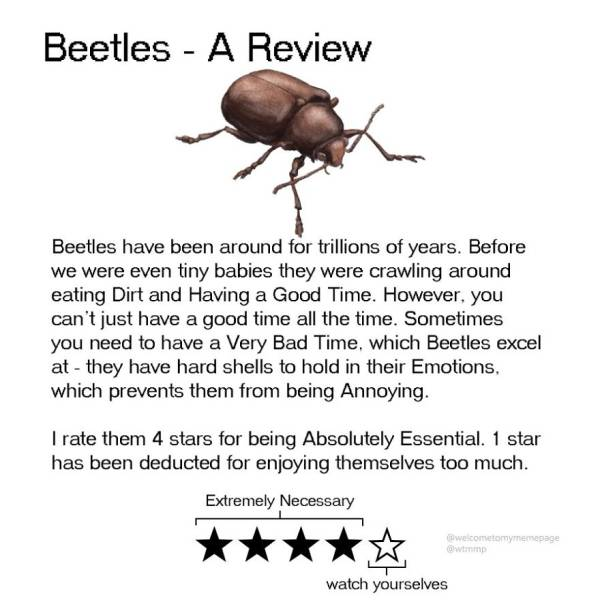 Animal Reviews