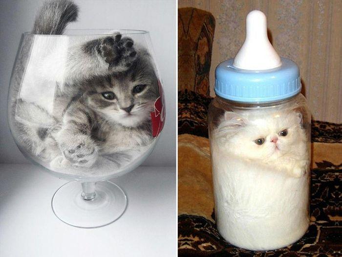 Cats Are Liquid | Animals
